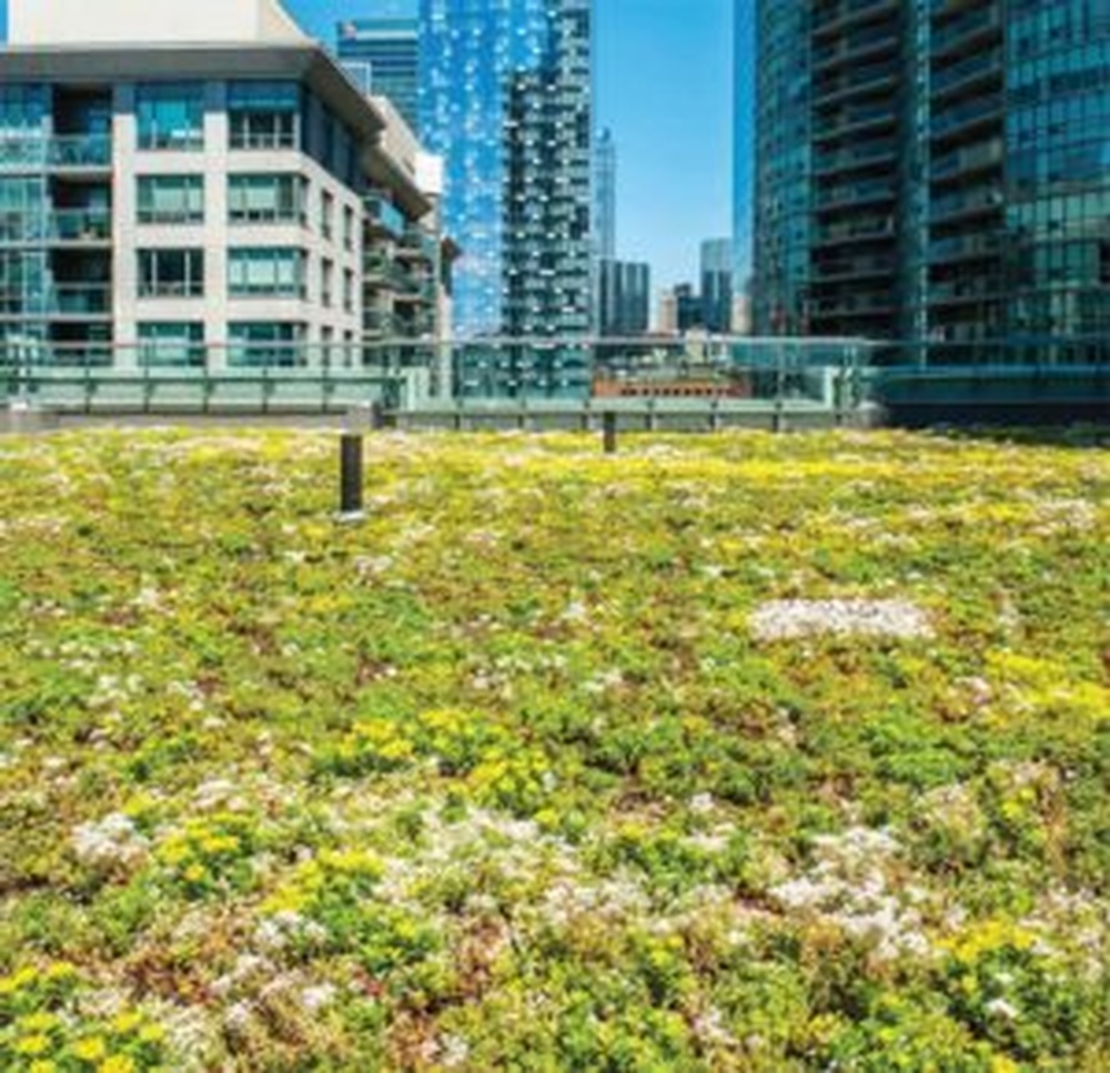 Beauty-Vegetated-Roofs-with-Friction-Detention-300x290.jpg